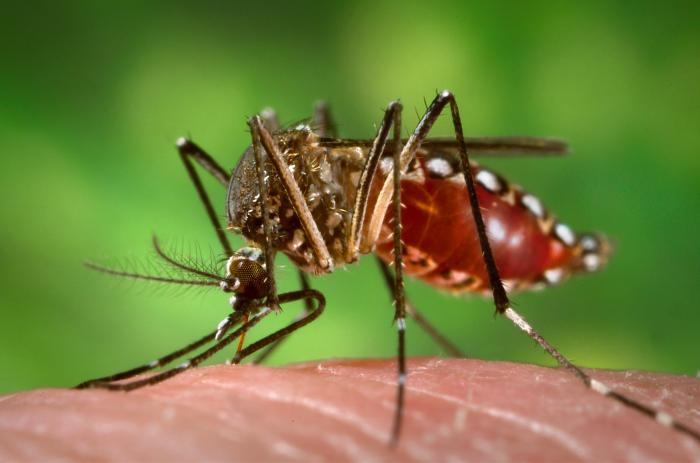 Día Mundial Salud_Mosquito
